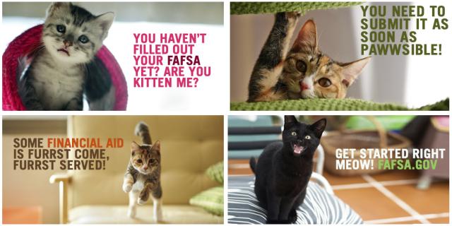 031015 fafsa kittens